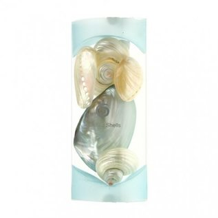 Polished Shells Gift Set - Blue