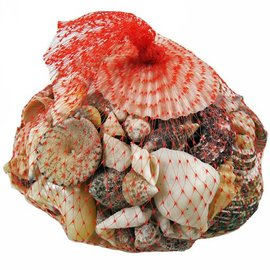 Net Bag with Assorted Shells