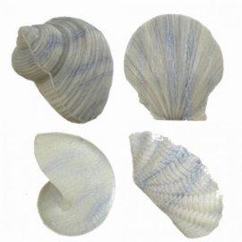 Shell Soap - Grey x3