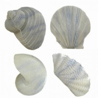 Shell Soap - Grey x3