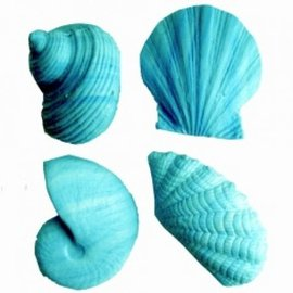 Shell Soap - Turquoise x3