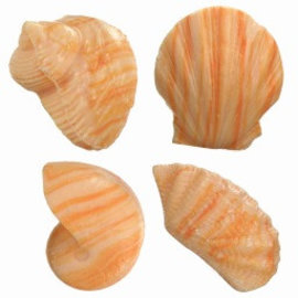 Shell Soap - Peach x3