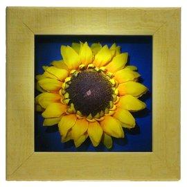 Sunflower Picture 6X6X1""