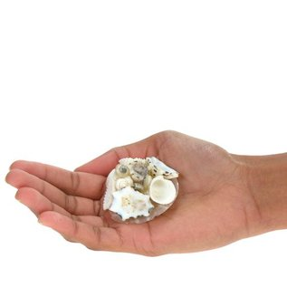White Capiz Disc with Shells