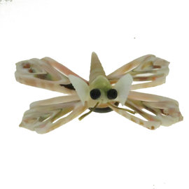 SEAURCO Butterfly Craft Kit, Seashell shell Craft kit