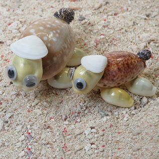 SEAURCO Turtle Family Craft Kit, Seashell shell Craft kit