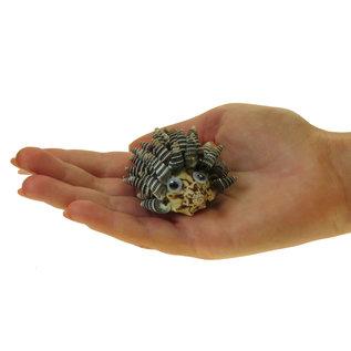 SEAURCO Hedgehog Craft Kit, Seashell shell Craft kit