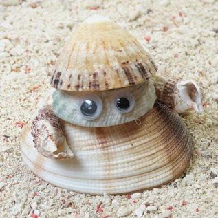 SEAURCO Crab Craft Kit, Seashell shell Craft kit