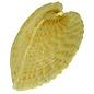 SEAURCO Heart Shaped Clams, Angel Wings Seashell Collectors Shell