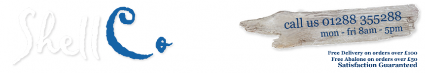 Suppliers of the finest Seashells for over 40 years