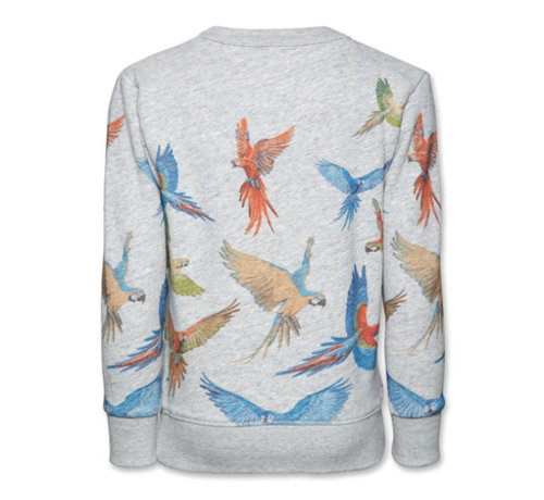 American Outfitters 119-2200-13C-neck sweater parrots