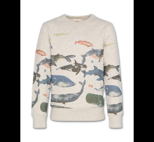 Ao76 221-2200-05 sweater c-neck sea