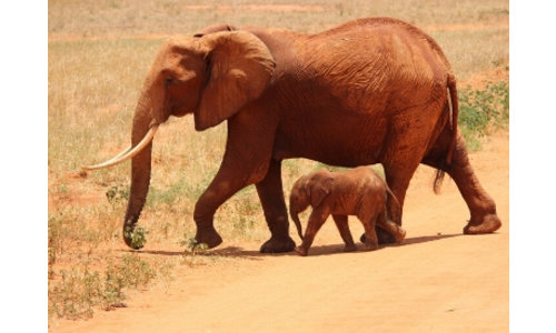 Cadeautjes met olifanten