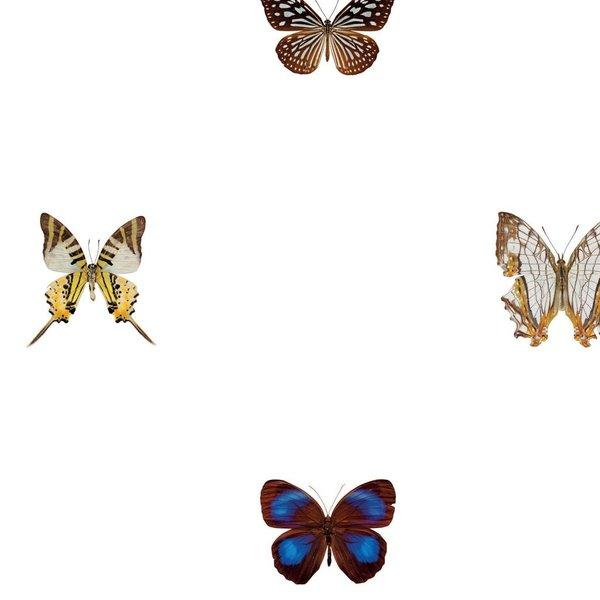 160 different butterflies NATR00401015