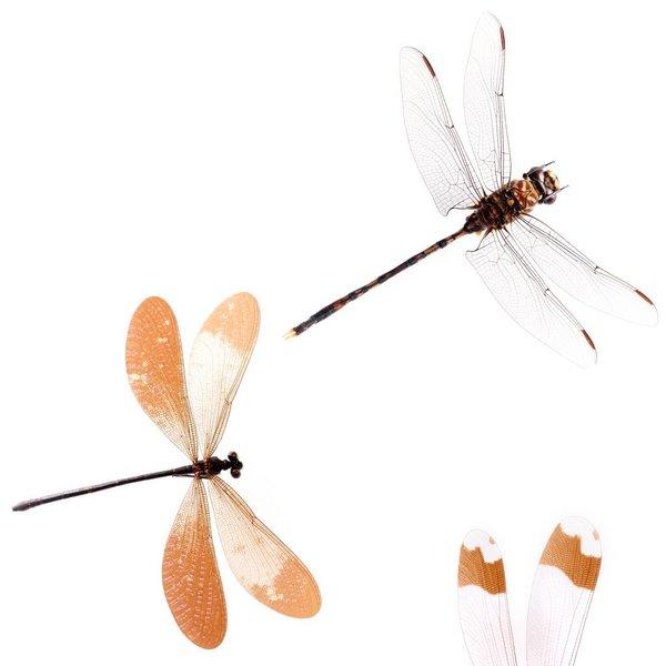 Various dragonflies NATR00200916