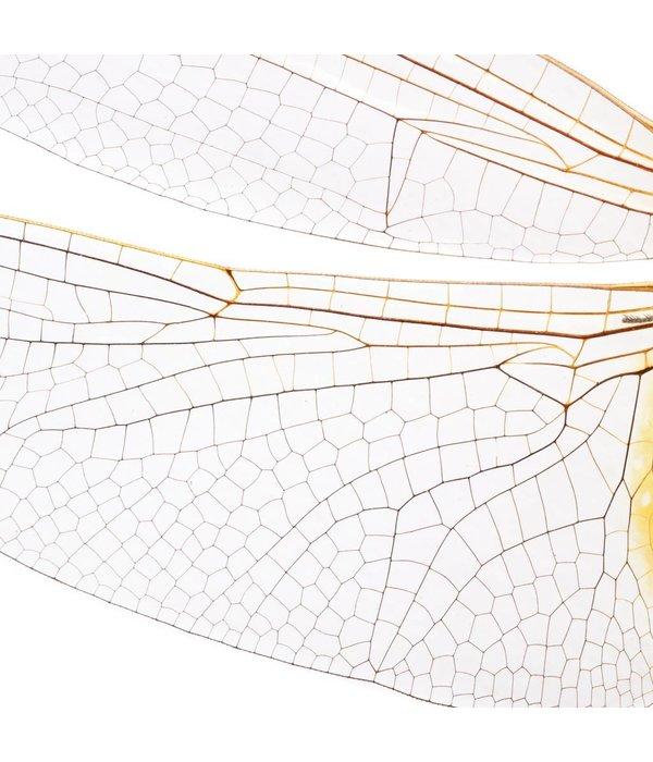 Naturalis-Originals Big dragonfly NATM00070916