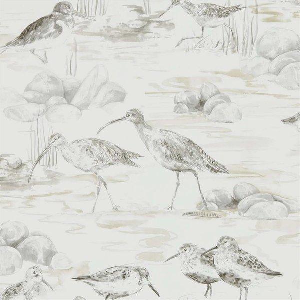 ESTUARY BIRDS 216493