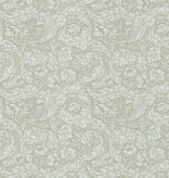 Morris-Co BACHELORS BUTTON 214733