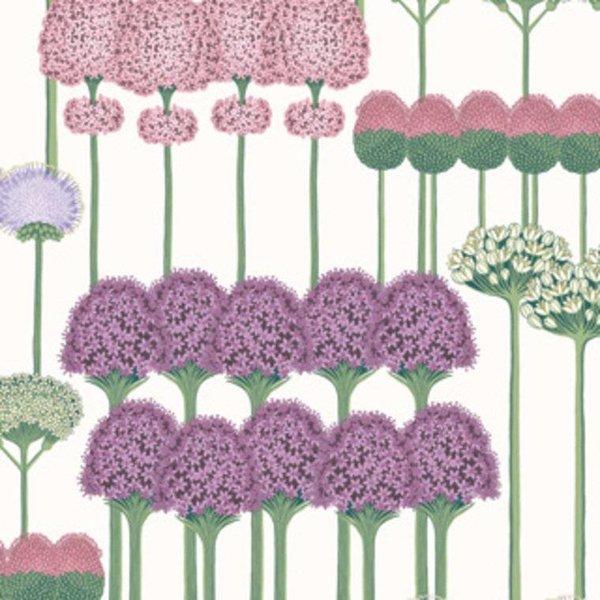 Allium 115/12034