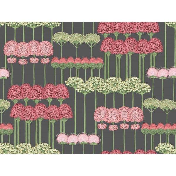Allium 115/12037