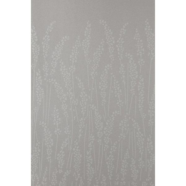 Feather Grass BP5101