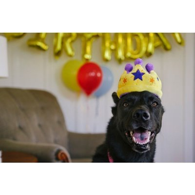 P.L.A.Y. Party Time Collection -Canine Crown