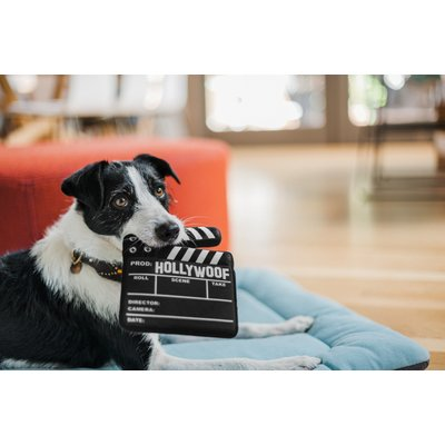PLAY Hollywoof Cinema Collection - Doggy Director Board