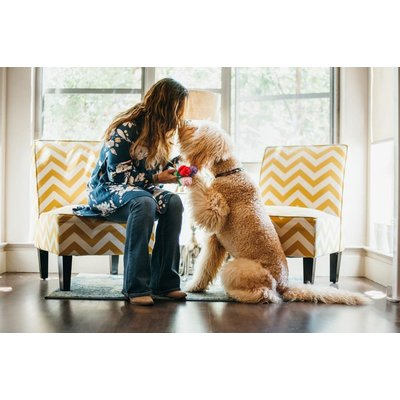 PLAY Puppy Love Collectie