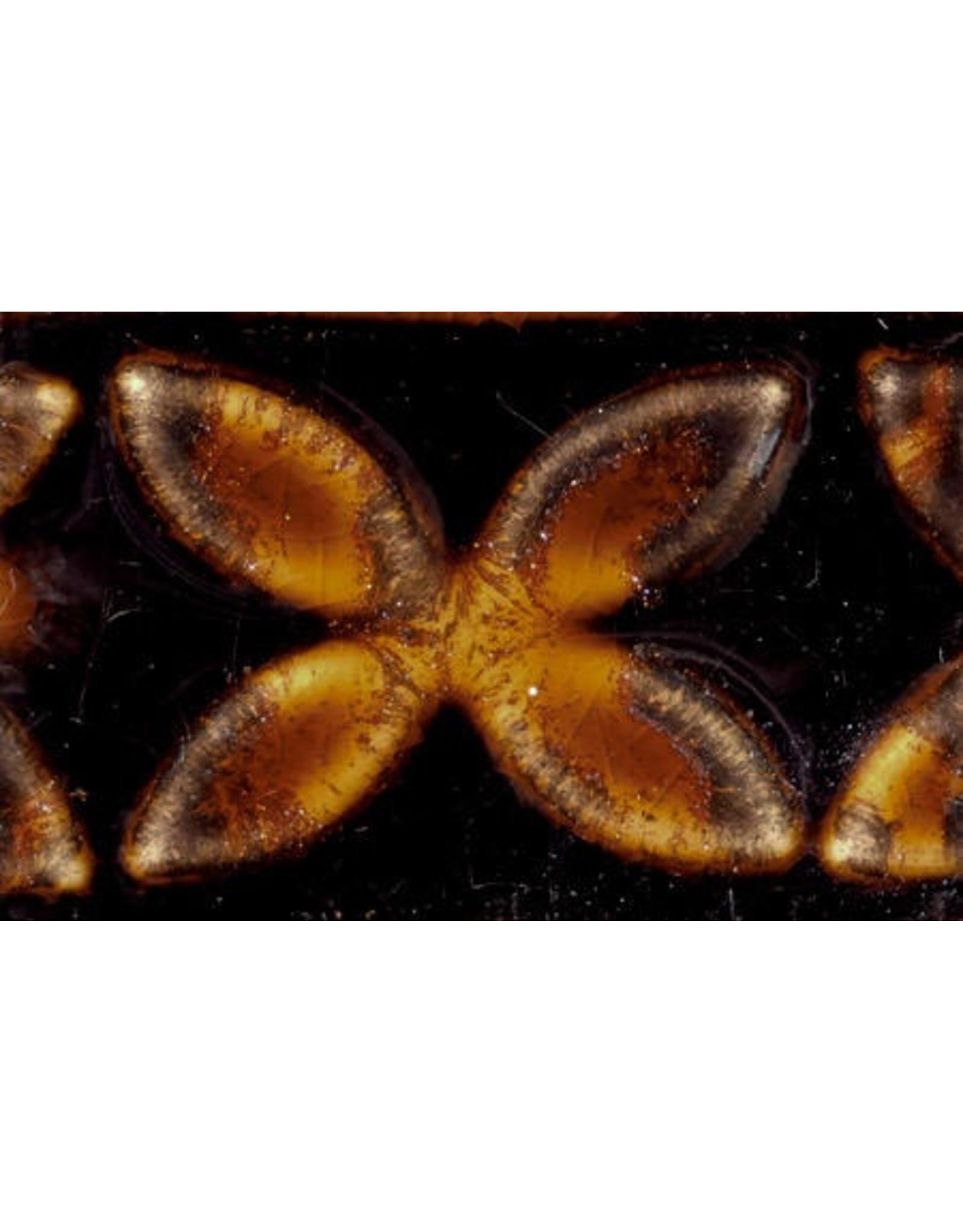 Adventurine AMACO Potters Choice Brush-on Stoneware Glaze 473ML 1180˚C - 1240˚C