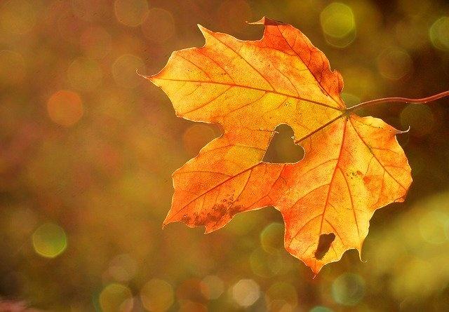 Herbst der Erleuchtung