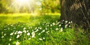 Mysteriöse Mittsommernacht: Die Magie der Sommersonnenwende