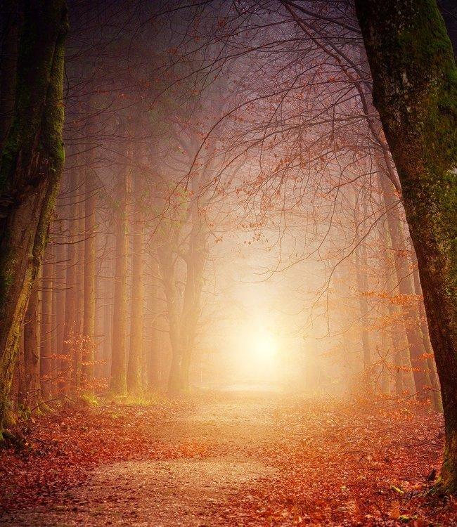 Smaranaa Energetische Ahnenheilung: Familientherapie für die Seele