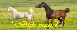 Blije paard