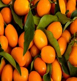 - Kumquat - sciroppo di frutta