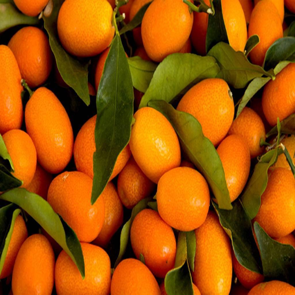 - Kumquat - sirop de fruits