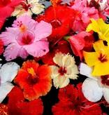 - Hibiscus - sirop de fruits