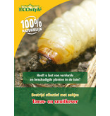 Ecostyle Koude aaltjes tegen larven taxuskever en snuitkever