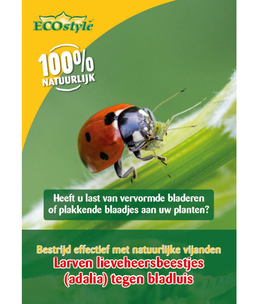 Ecostyle Larven van lieveheersbeestjes tegen bladluizen (adalia)
