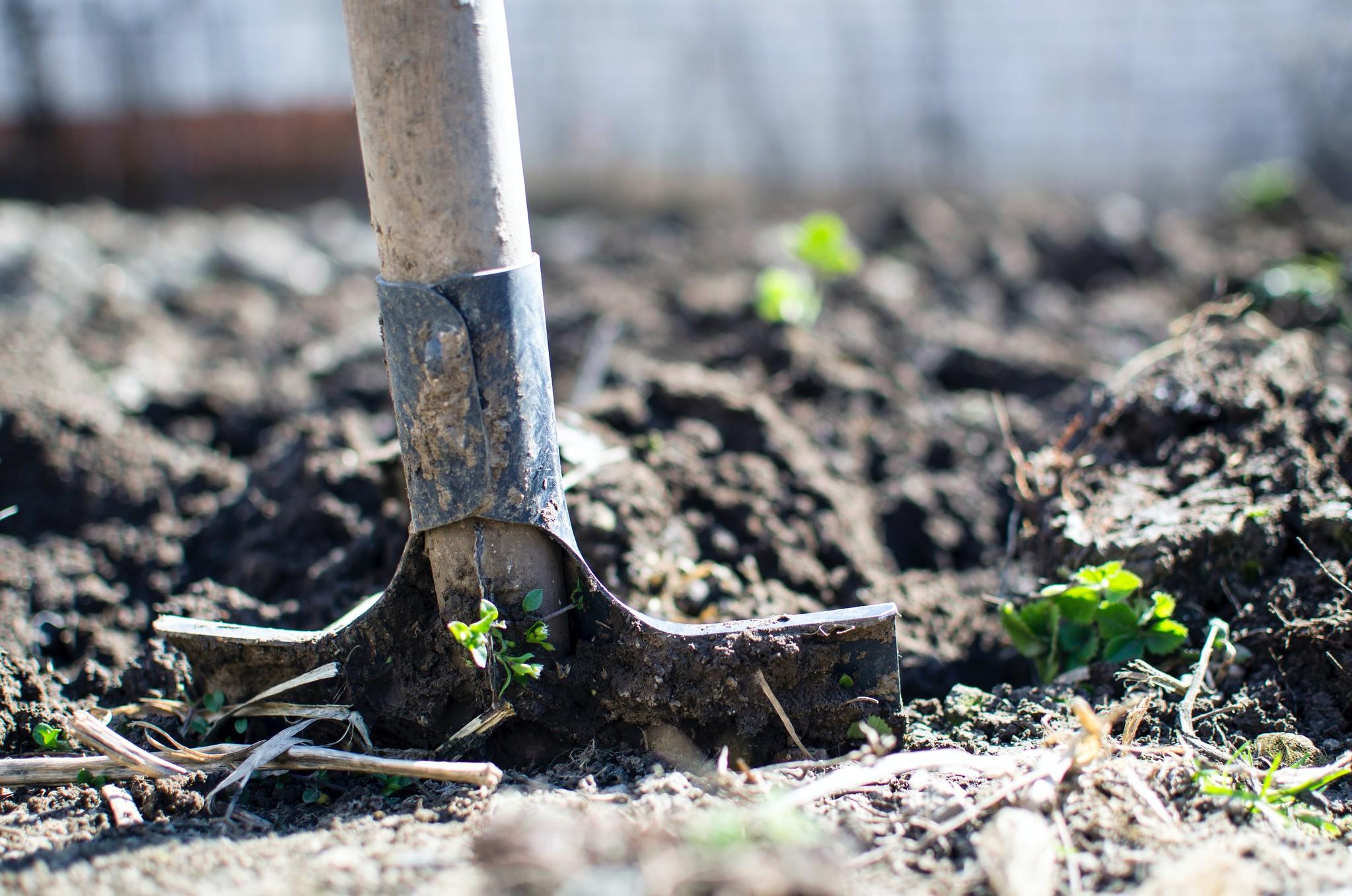 Onkruid bestrijden in uw tuin