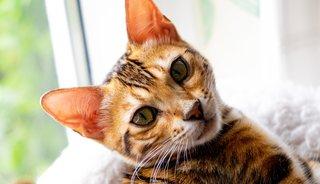Hoe kan ik ongewenste katten verjagen uit mijn tuin?