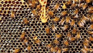 Dit is waarom je een insectenhotel in je tuin moet nemen