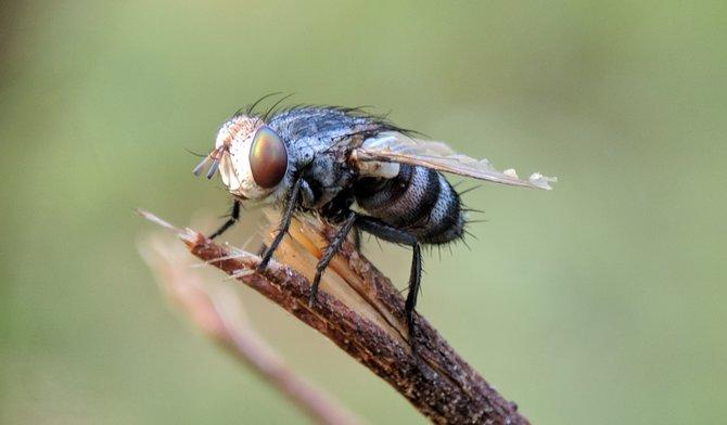 5 feitjes die je nog niet wist over fruitvliegjes