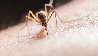 De mug & zijn functie