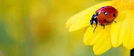 Insecten en beestjes