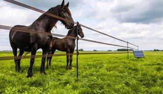 Horses Product van het Jaar 2018