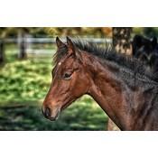 Ecostyle paard