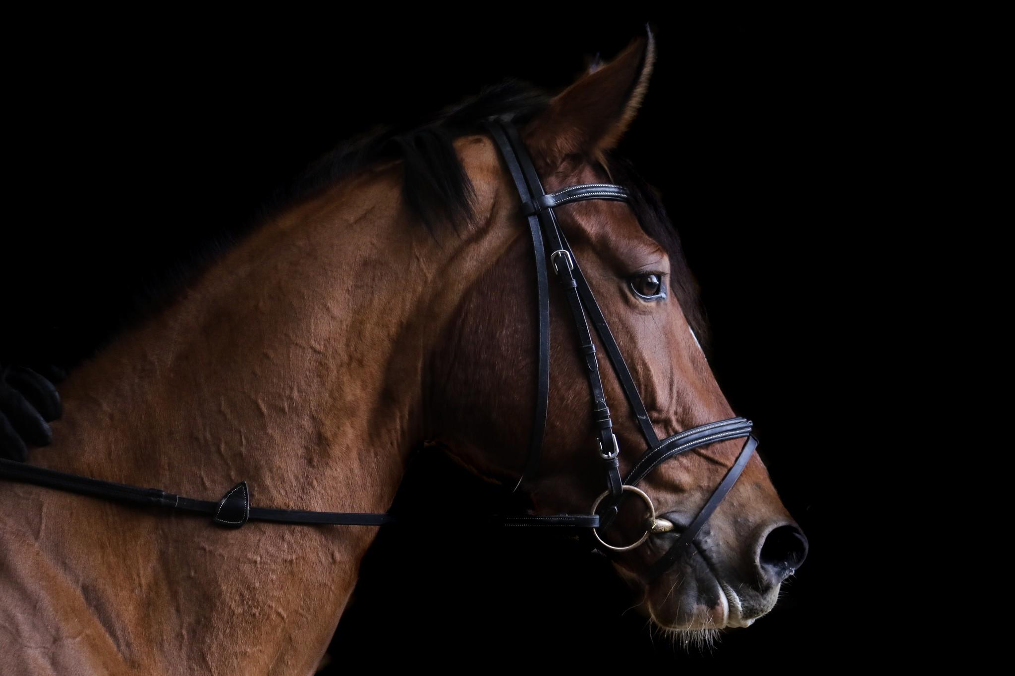 Dit zijn dé hebbedingetjes die u moet hebben voor uw paard