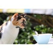 Schrikdraad voor katten