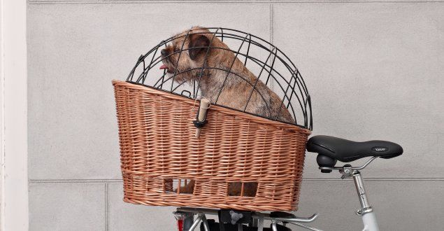 Basil Bike baskets for dogs