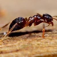 Wat is het beste middel tegen mieren